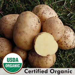 Potato, Yukon Gold OG 2 1/2lbs